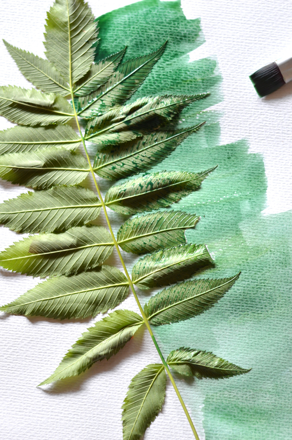 Watercolor Leaf Prints - Using simple techniques, this pretty leaf painting is lovely way to brighten a room and is very beginner-friendly.