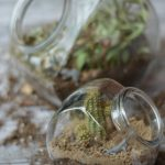 Treat Jar Terrarium How-To