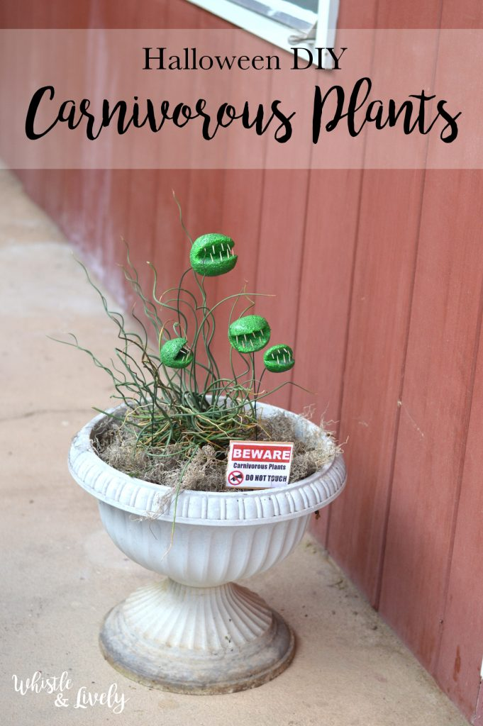 DIY Carnivorous Plants
